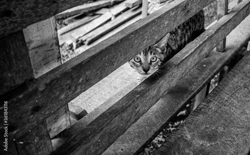 Gato malhado alerta olhando para a câmera entre um cercado de madeira Wallpaper Mural