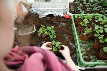 Transplanting Plants Flowers I...