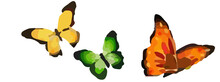 Three Colored Butterflies