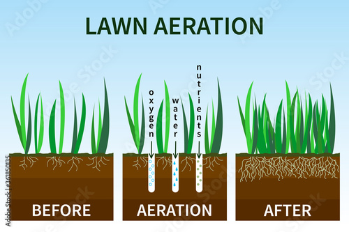 Vector illustration of stages lawn aeration Billede på lærred