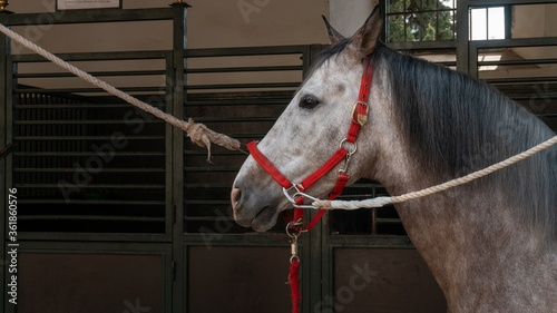 Photo Horse in a farmyard in Corboda, Andalusia, Spain at daytime