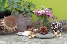 Succulente ,fleurs Fraiches Et Séchées , Décoration