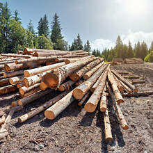 Pile Of Harvested Wooden Logs ...