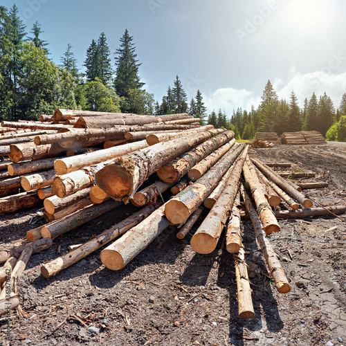 Pile of harvested wooden logs in forest, trees with blue sky above background Tapéta, Fotótapéta