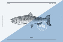 Hand-drawn Salmon Vector Illustration. Sea Fish In Engraving Style On A Light Background. Design Element For Fish Restaurant, Market, Store, Flyer, Packaging, Label, Menu.