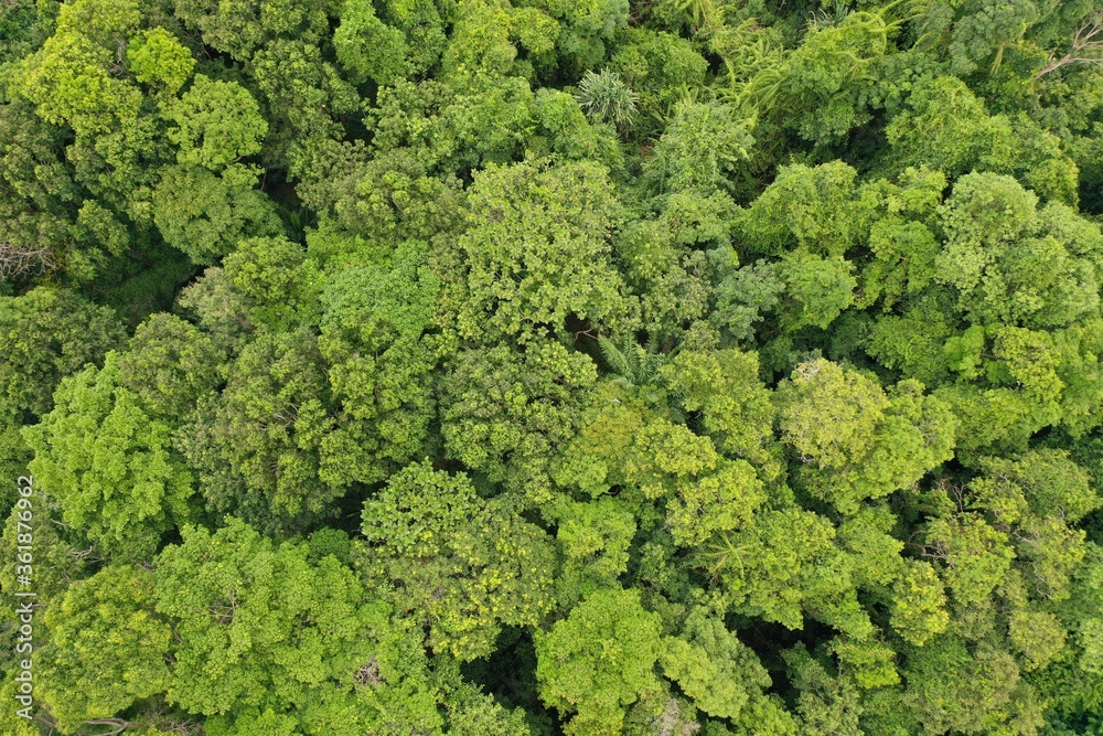 Rainforest trees canopy from above with aerial drone