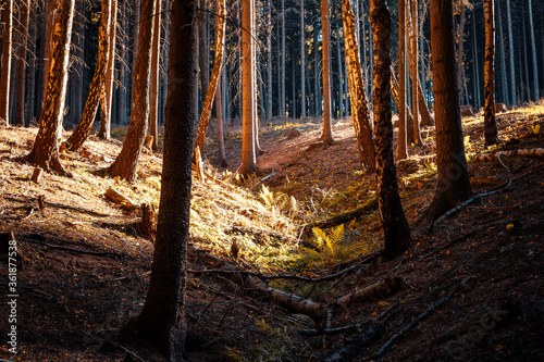 Trees during autumn day in the middle of a deep forest