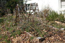 Dormant And Untended Vegetable Garden Choked With Weeds