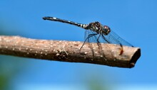 Wild Life Of A Dragon Fly