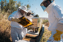 Beekeepers Working To Collect Honey. Organic Beekeeping Concept.
