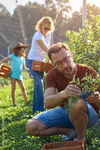 Photo Modern family picking blueberries on a organic farm - family business concept