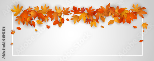 Obraz Autumn falling leaves background - fototapety do salonu