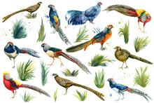 Set Of Pheasant Birds. Waterco...