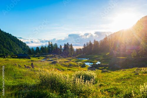 Alpine landscape, mountain stream in idyllic environment amid rocks meadows and forest. Sunburst at sunrise, the italian Alps.