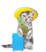 Funny Kitten Wearing Summer Ha...