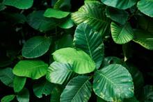 Lush Green Leaves Foliage Back...