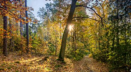 jesień w lasach na Mazurach w północno-wschodniej Polsce