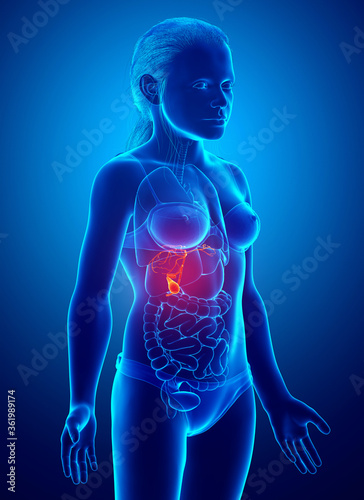 3d rendered medically accurate illustration of girl Organs Gallbladder Anatomy Canvas Print