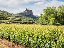 Beautiful Scenery Of Vineyards...