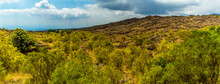 A Panorama Of Vegetation Cover...