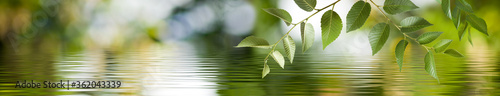 Fotomural Image of a branch with leaves above the surface of the water