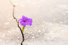 Purple Flower Growing From Crack In The Rod, Hope And New Growth In The Middle Of Crisis Background