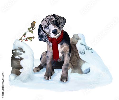 Vászonkép Cucciolo di cane seduto sulla neve mentre osserva un pettirosso