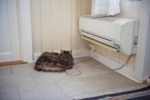 Grey, Fluffy Cat Laying In Fro...