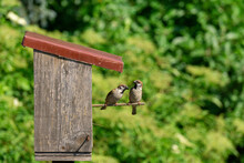 Two Sparrows Sitting On A Pole...