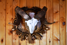 Hunting Lodgehunting Trophy Ram Horns Hanging On The Wooden Wall Of The Hunting Lodge.