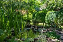 Beautiful Small Garden Pond Wi...