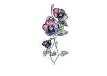 Hand Drawn Watercolor Illustrations Of Floral Ornament With Flowers And Leaves On White Background. Pansy Flowers