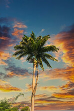 A Tall Palm Tree Under Nice Sk...