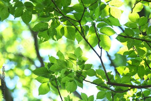 Fotografie, Obraz 新緑と木漏れ日