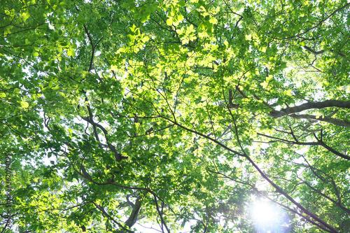 Fototapeta 木と緑