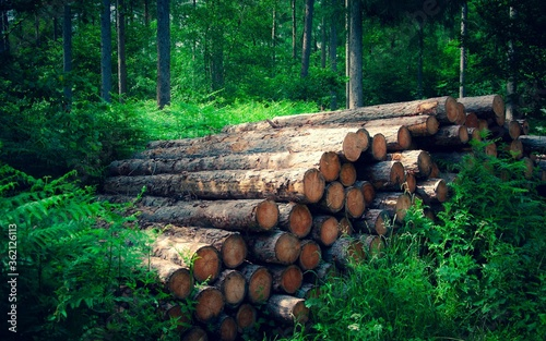 Photo Pile of logs in the forest