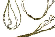 Vine Roots (Cayratia Trifolia)...