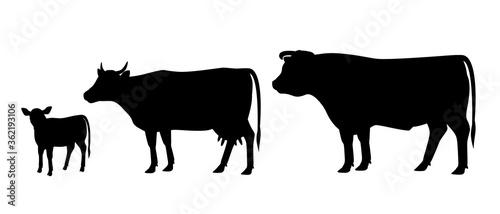 Cuadros en Lienzo Vector illustration of bull, cow and calf