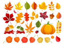 Big Set Of Fall Leaves And Autumn Objects. Clipart With Many Different Leaves, Pumpkin, Acorn, Physalis And Rowanberry. Vector Illustration.