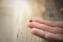 Ladybug On A Baby Finger Close...