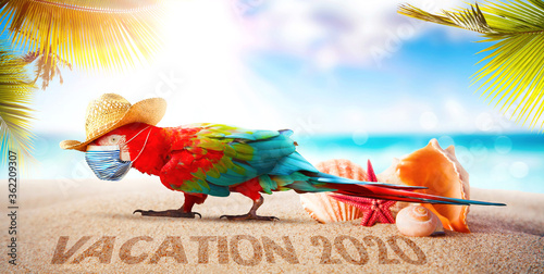 Fototapeta Macaw parrot with medical mask on vacation obraz