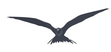 Black Bird In Fly