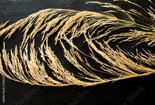 Fototapeta getrocknete grashalme vor schwarzen hintergrund als textur