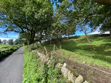 Country Lane Near Lindley, Wit...
