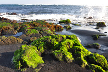 Green Algae On Rocks At The Black Sand Beach (Punalu'u), On The Big Island Of Hawaii, With Waves In The Background