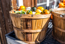Closeup Of Small Yellow, Green And White Multicolored Decorative Carving Pumpkin Squash In Wooden Basket With Sign For Bushel Pounds On Display In Farm In Autumn