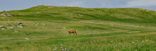 Natural Summer Landscape. Panorama Summer Flowering Meadow In The Mountains. Lonely Horse Grazes In A Field. Fresh Green Rural Meadows On A Sunny Day With Blue Sky.