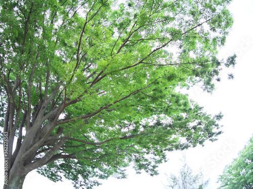 大樹の緑と木漏れ日 Tablou Canvas