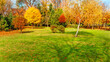 autumn trees at backyard and garden