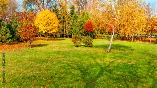 Obraz autumn trees at backyard and garden - fototapety do salonu